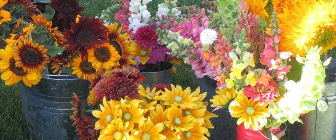 Cut-Flowers-1400x597