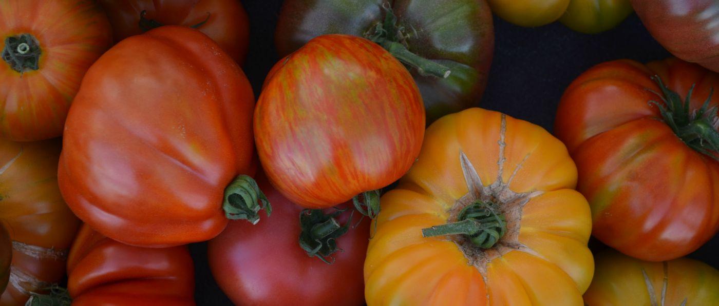 Tomatos-1400x597